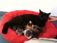 Da waren es noch drei Katzenbabies... Alus eigenes und die beiden Pflegekitten.